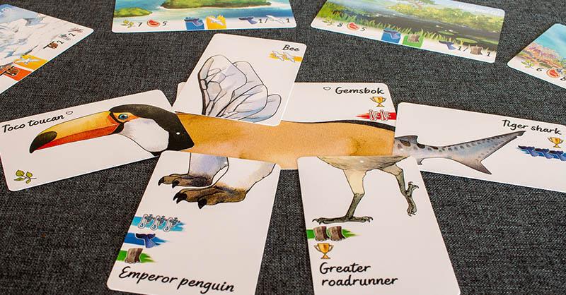 Darwin's Choice - Tier aus sechs Karten